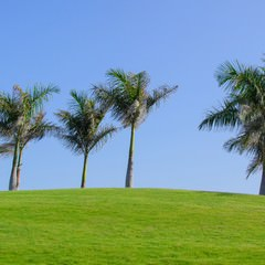 Gran Canaria Meloneras Golf
