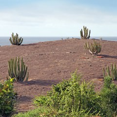 Gran Canaria park in Puerto de las Nieves