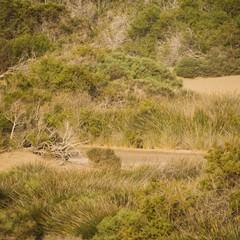 Gran Canaria vegetazione tra le dune di Maspalomas