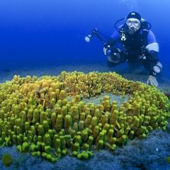 Immersioni subacquee a Gran Canaria, Risco Verde