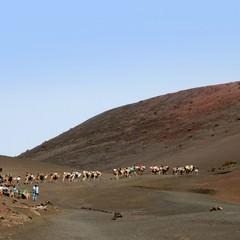 Safari cammelli Gran Canaria