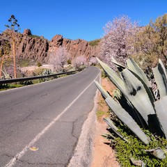 Strada di Montagna a Gran Canaria