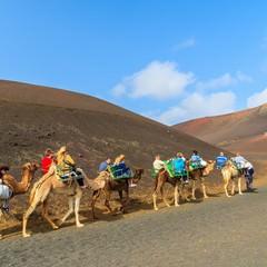 Turisti a cammello nel parco di Lanzarote