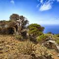 Ecoturismo a Gran Canaria: arriva una rete tra Governo e Università