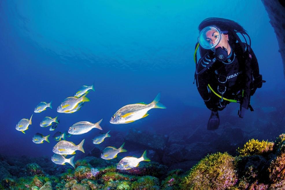 Escursione subacquea a Gran Canaria