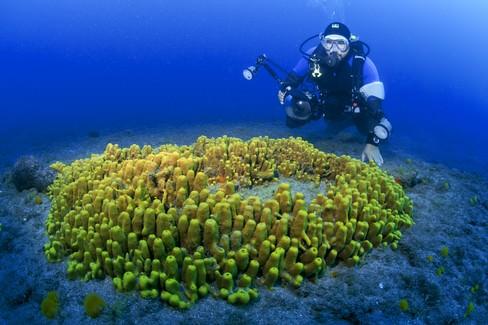 Immersioni subacquee. a Risco Verde, in Gran Canaria